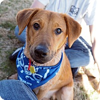 Adopt A Pet :: Rascal - Cross Roads, TX