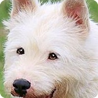 Adopt A Pet :: GHOST(BEYOND ADORABLE!!) - Wakefield, RI