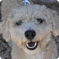 Adopt A Pet :: Tobias - Atlanta, GA