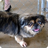 Adopt A Pet :: Carley - Clermont, FL