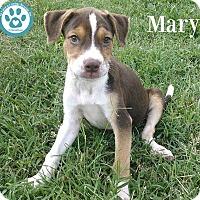 Adopt A Pet :: Mary - Kimberton, PA