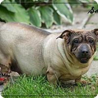Adopt A Pet :: Sadie - Ashland, WI
