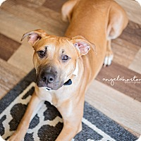 Adopt A Pet :: Chico - Burlington, NC