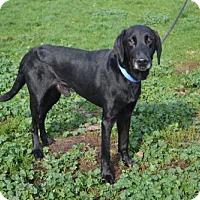 Adopt A Pet :: Sir Fidel - Akron, OH