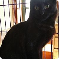 Adopt A Pet :: Joey - Sharon Center, OH