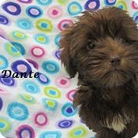 Adopt A Pet :: Dante - Bartonsville, PA