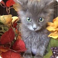 Adopt A Pet :: Violet - Orange, CA