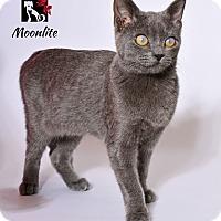 Adopt A Pet :: Moonlite - Tomball, TX