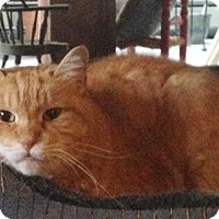 Adopt A Pet :: Pica  8 yrs - Sterling, MA