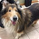 Adopt A Pet :: Skylar