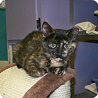 Adopt A Pet :: Thelma - Dover, OH