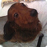 Adopt A Pet :: Sam - VA - Jacobus, PA