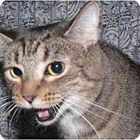 Adopt A Pet :: Weezy - Toledo, OH