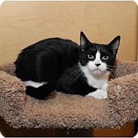 Adopt A Pet :: Moe - Farmingdale, NY