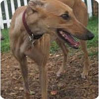 Adopt A Pet :: Greta - Canadensis, PA