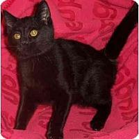 Adopt A Pet :: Maddox - Colmar, PA
