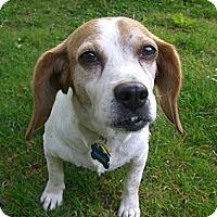 Adopt A Pet :: Tiana - Novi, MI