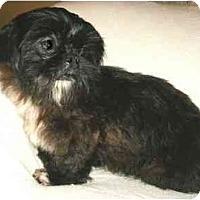 Adopt A Pet :: Misty - Mooy, AL