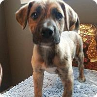 Adopt A Pet :: Kix - Medicine Hat, AB