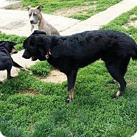 Adopt A Pet :: Sally - Mechanicsburg, PA