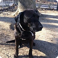 Adopt A Pet :: Sally - Shelter Island, NY