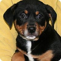 Adopt A Pet :: Hanna - York, PA