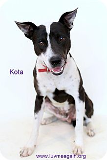 Border Collie Mix Dog for adoption in Bloomington, Minnesota - Kota