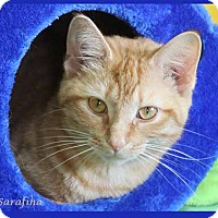 Adopt A Pet :: Sarafina - South Bend, IN