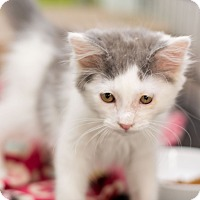 Adopt A Pet :: Leroy - Fountain Hills, AZ