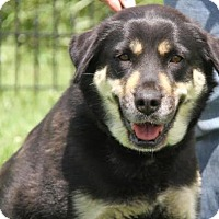 Adopt A Pet :: Roxy - Westminster, MD