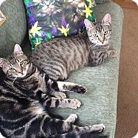 Adopt A Pet :: Coby & Zeby - Plainville, MA