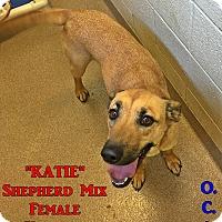 Adopt A Pet :: 1-5 Katie - Triadelphia, WV