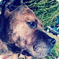 Adopt A Pet :: Dee Dee - Berkeley, CA