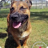 Adopt A Pet :: Chuck - Sidney, OH