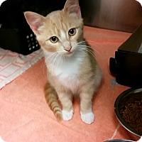 Adopt A Pet :: Finley - Chippewa Falls, WI