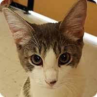 Adopt A Pet :: Larry - Mesa, AZ