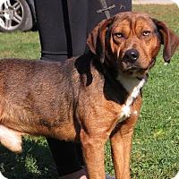 Adopt A Pet :: Winston - Unionville, PA