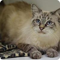 Adopt A Pet :: Queen Frisky - DFW Metroplex, TX