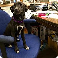 Adopt A Pet :: Kaitlyn - Hopkinton, MA