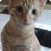 Adopt A Pet :: Webster - Flower Mound, TX