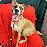 Adopt A Pet :: Cash - Melbourne, KY