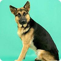 Adopt A Pet :: Edin - Montgomery, AL