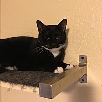 Adopt A Pet :: Joey - Lauderhill, FL
