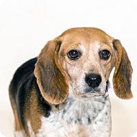 Adopt A Pet :: Kelby - Naperville, IL
