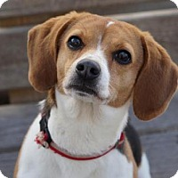 Adopt A Pet :: Mushu - El Cajon, CA