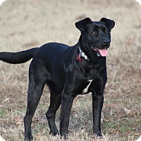 Adopt A Pet :: Bogie - Glastonbury, CT