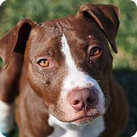 Adopt A Pet :: Autumn - Dayton, OH