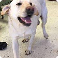 Adopt A Pet :: Walcott - Acworth, GA