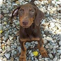 Adopt A Pet :: Leonard--adopted!! - New Richmond, OH