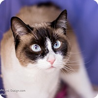 Adopt A Pet :: Lani - Fountain Hills, AZ